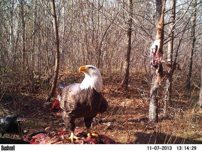50 best trail cam pics on thrill on trail cam 2014 thrill on