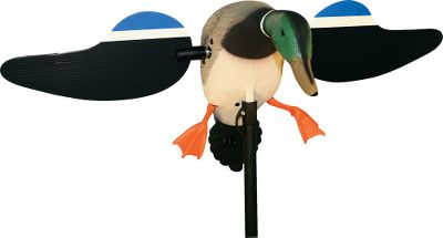Hunting The attention-grabbing flash of the Mojo's spinning wings imitates a duck's natural backpedaling landing motion, driving ducks crazy and pulling them in from extremely long distances. Designed by fanatical duck hunters, this flash decoy uses a large, quiet direct-drive motor to spin durable coroplast wings. The redesigned wings now easily attach to the motor magnetically (no more thumbscrews) and are quieter, more energy efficient and spin faster. The support pole is also quieter and more user-friendly. Mojos have enhanced paint detail with a flared tail and cupped body for incredible realism and high visibility. Use the external charger port to charge the battery without removing it. Hinged back for easy battery access and remote attachment. Waterproof rubber power button. Includes factory-installed remote control, 4-ft. mounting stake, 6-volt rechargeable battery and charger. Available: Drake, Hen. Color: Natural. - $184.99