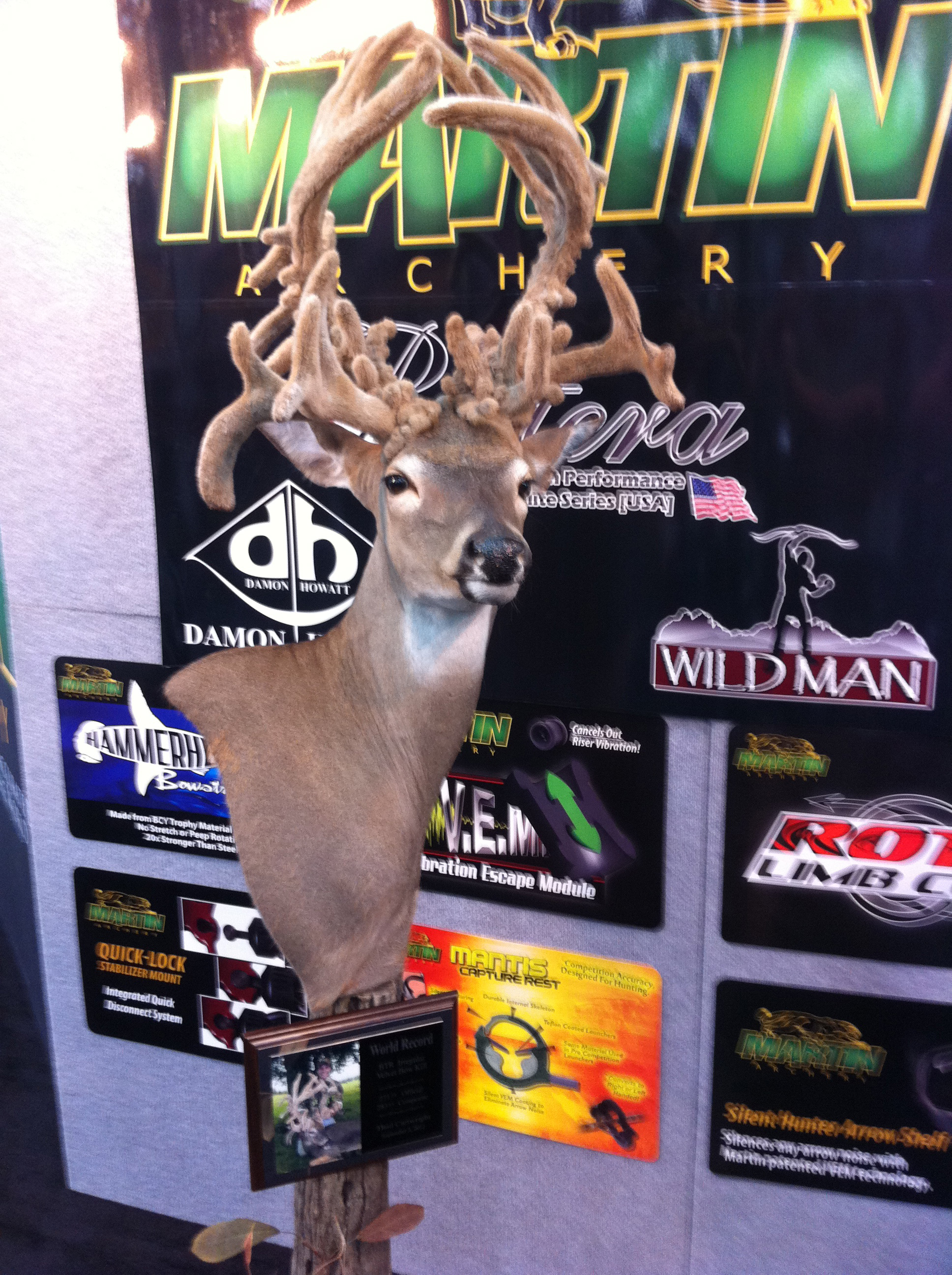 Hunting World record BTR irregular bow velvet bow kill by Thad Cartwright in September, 2012. Scored 273 2/8! On display at the Martin Archery booth.