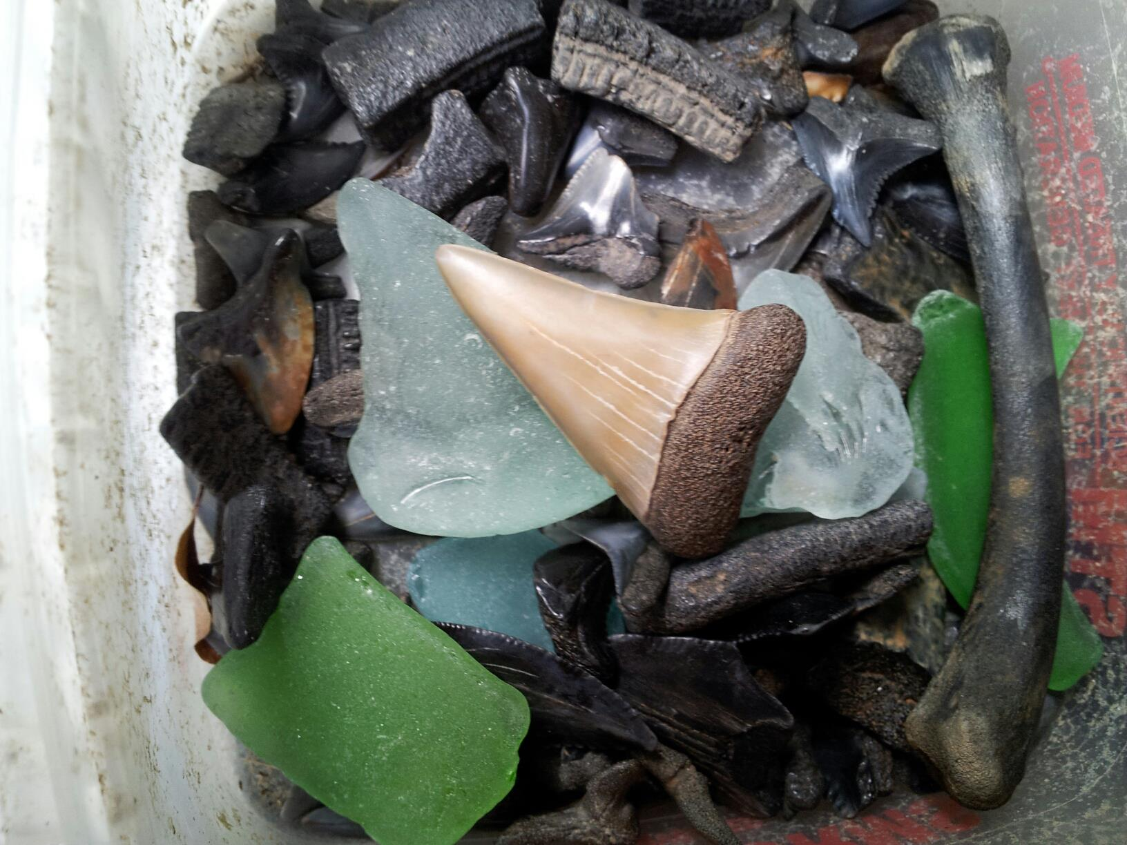 Entertainment Patuxent River, MD Fossilized shark teeth and sea glass