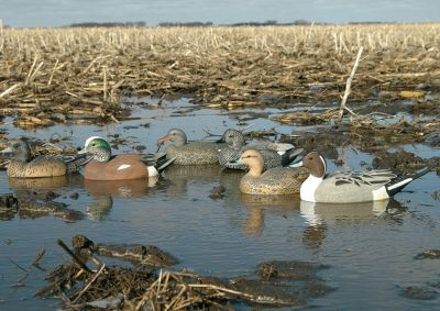 Hunting Veteran waterfowlers know that throwing a different species or two into the decoy spread can sometimes be the deciding factor that causes wary birds to come on in for a closer look. This first-of-its-kind floating-decoy six-pack from Greenhead Gear contains a realistic decoy hen and drake from each of the following: Pintail, Wigeon and Gadwall. They'll add crucial variety to your presentation. Includes one pair of each: Pintall, Wigeon and Gadwall. - $29.88