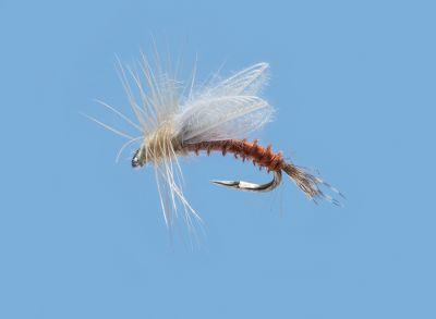 Flyfishing A dry fly pale morning dun emerger pattern thats essential to any fly-fishermans assortment. Per 2. Sizes: 16, 18. Type: Dry Flies. - $4.79