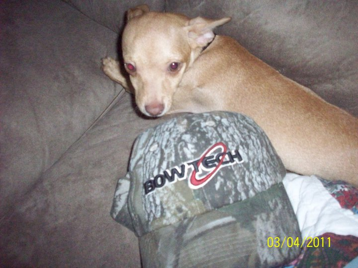 From Scotty McClanahan - His dog and his favorite hat! Anyone else have photos of their pets with BowTech Gear?