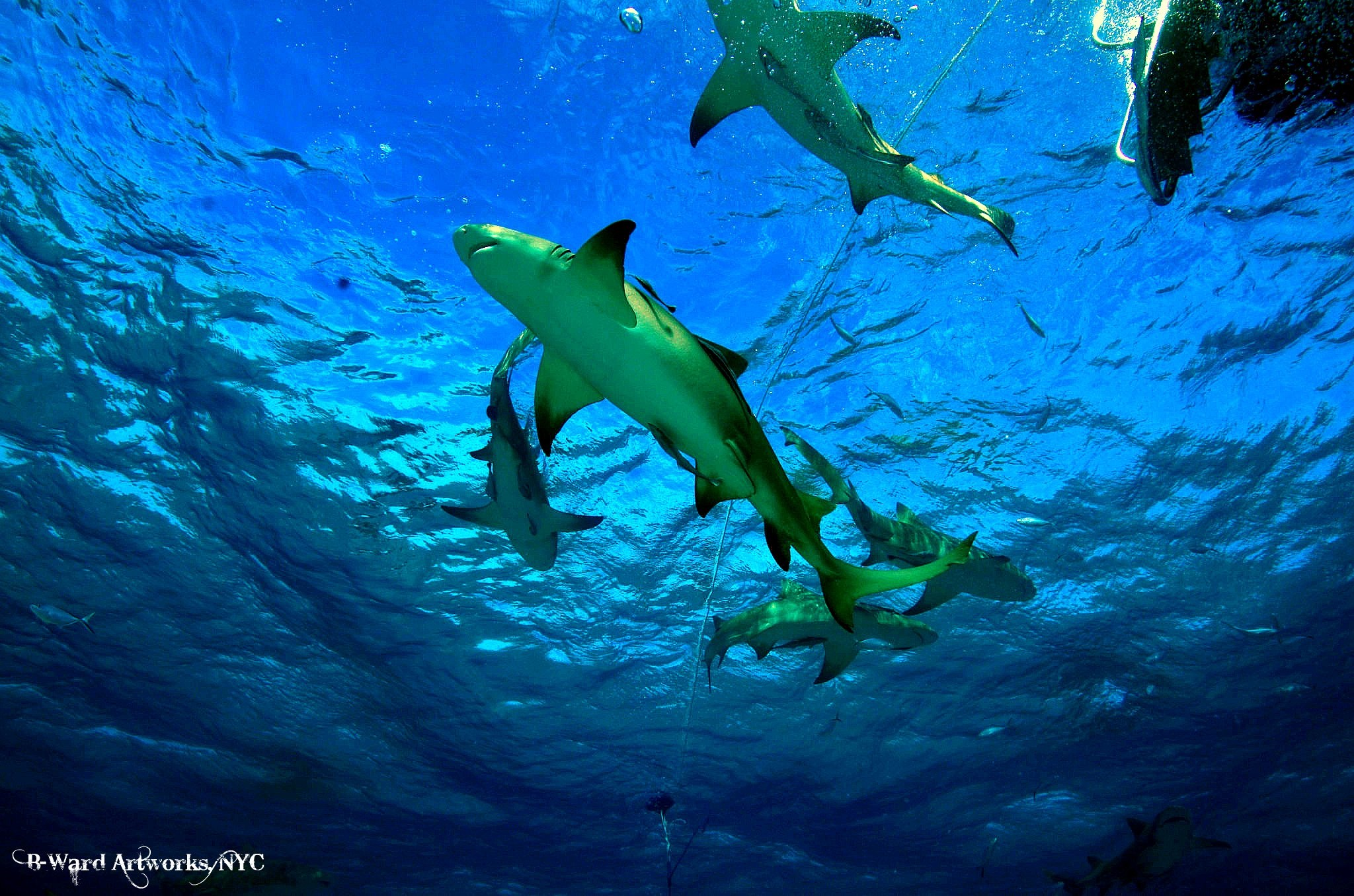 Scuba Shark Dive in Bahamas