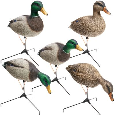 Hunting Long known for their rugged, realistic honker decoys, Big Foot now offers those same advantages to duck hunters with a line of full-body mallards. Art Ladehoff designed, carved and feathered these field decoys with painstaking attention to detail. Highlights include three different body styles, lifelike paint schemes and iridescent heads. Tri-Fold motion base system has a wider tripod base and dual flex cords for stability and motion. One-piece, rugged polyethylene construction ensures durability. 12-pack set includes four feeders (two hens, two drakes), six uprights (four drakes, two hens) and two looker drakes. All decoys measure approximately 22L x 7W. A 12-slot decoy bag (42L x 15W) is also included for easy transport and protection.Decoy dimensions: 22L x 7W.Bag dimensions: 42L x 15W.Set includes: Four feeders (two hens/two drakes) Six uprights (two hens/four drakes) Two lookers (one hen/one drake) - $199.88