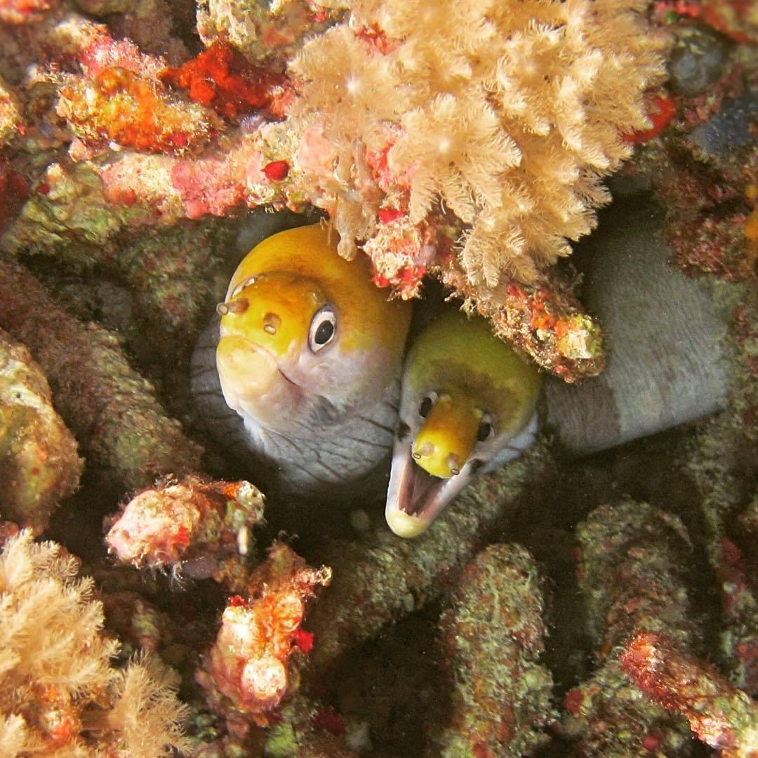 Diving Scuba Fish Seacreatures Dive Underwater Sub