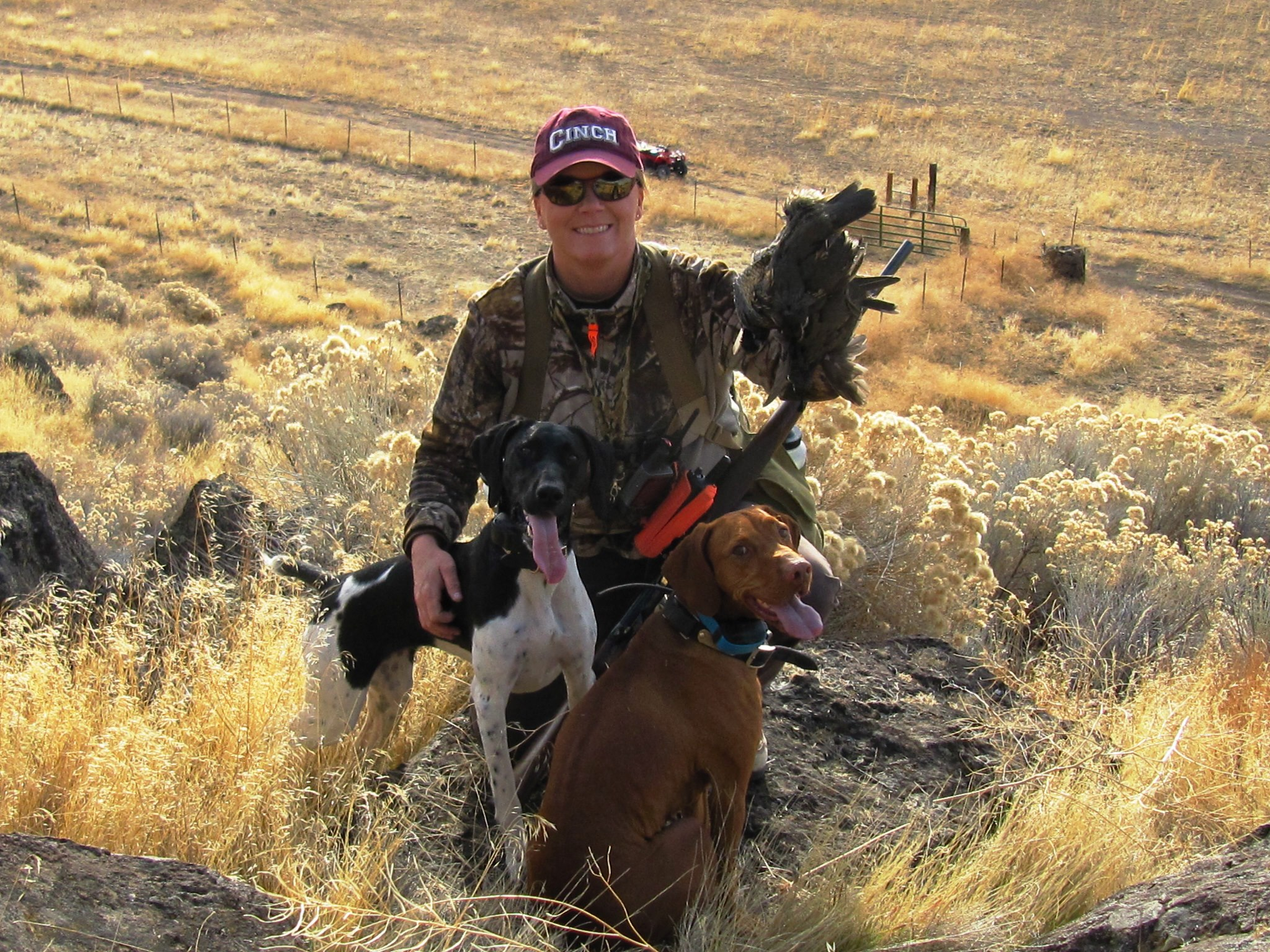 "Hunting Raven"" the German shorthaired pointer and ""Josie"" the Vizsla navigated this rugged northern California terrain hunting quail."