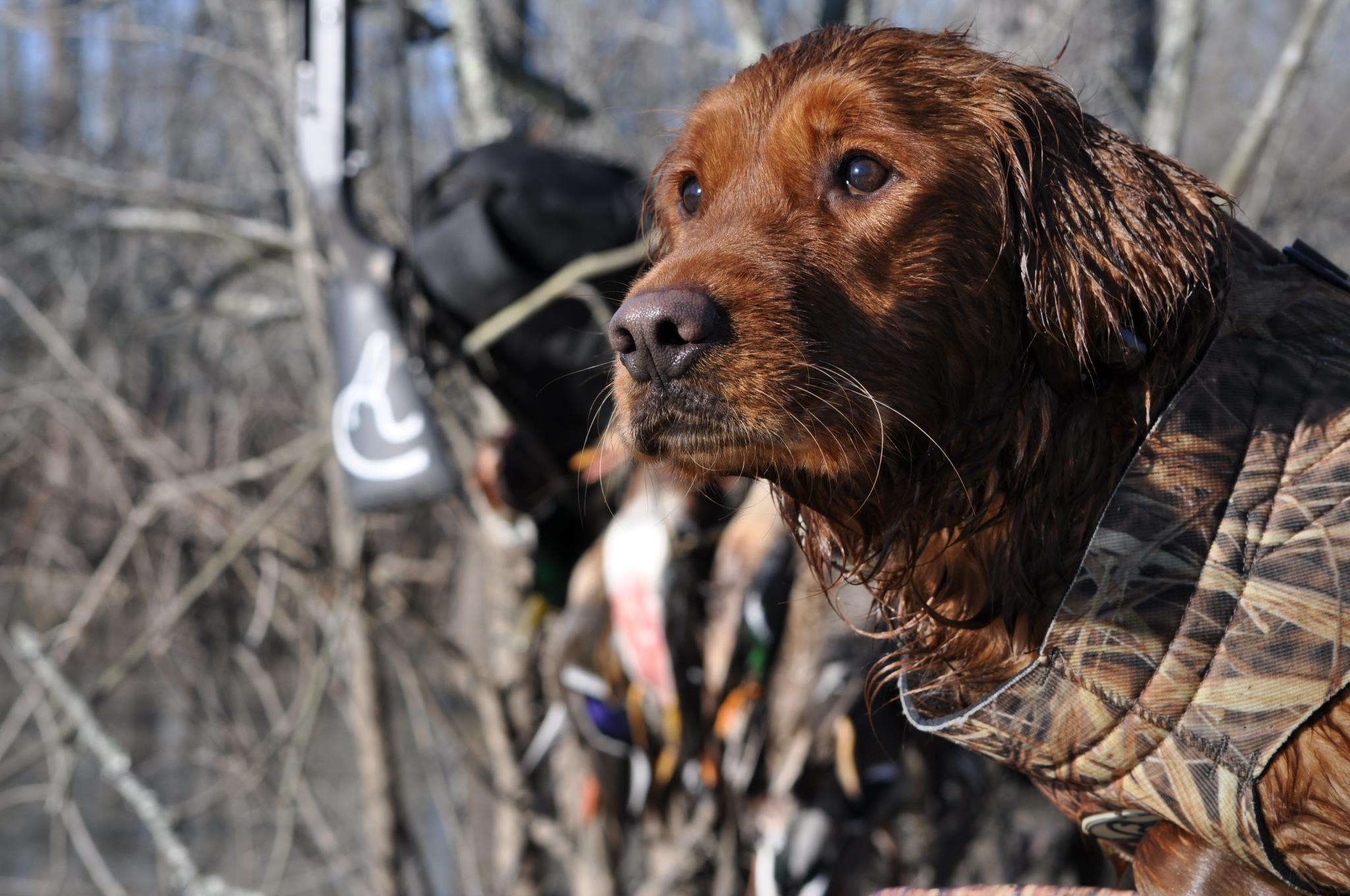 Hunting Ducks Unlimited