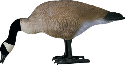 Entertainment Crafted of durable polyethylene to stand up to extreme cold without becoming brittle or cracking, the bodies perfectly mimic the intricate feather detail and posture of a real goose in the field. The patented oversized leg and foot system assembles into one piece without the use of ground stakes. All detailed areas are hand-painted with tough, nonfading paint for a true feathered appearance, while the basic colors are molded in to ensure a lifetime of service. Per 4. Dimensions: 35 L x 18 H x 12 W. Type: Canada Goose Decoys. - $149.99