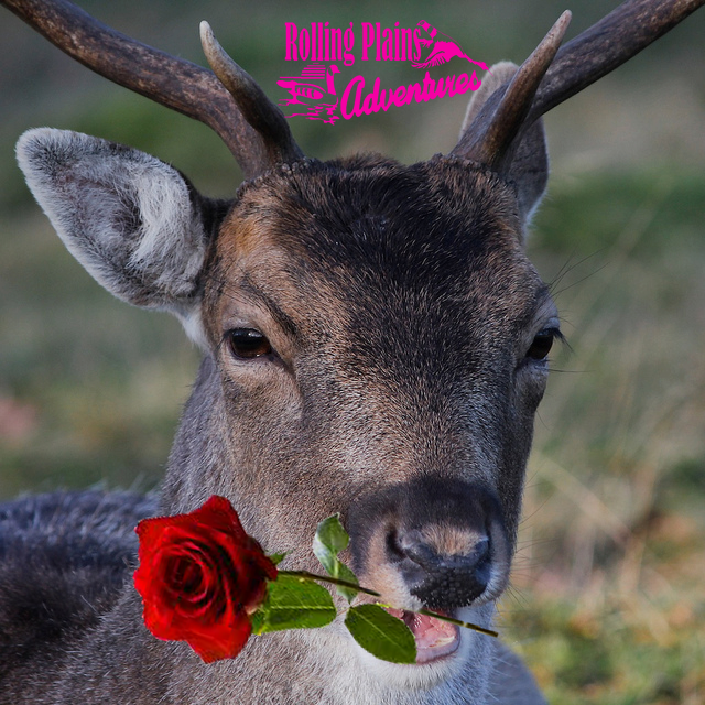 Happy Valentines Day from Rolling Plains Adventures!