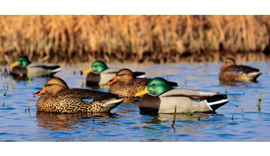 "Hunting Greenhead Gear® ""Hot Buy II""™ Weighted-Keel Mallard Decoy   $39.99"
