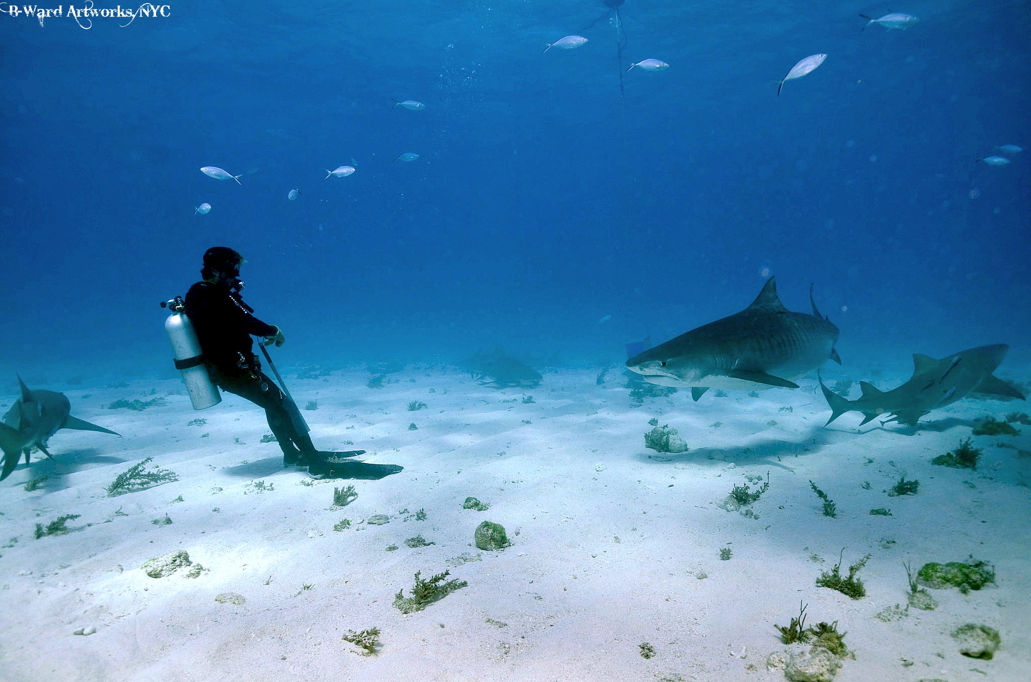 "Scuba ""Tango With A Tiger""