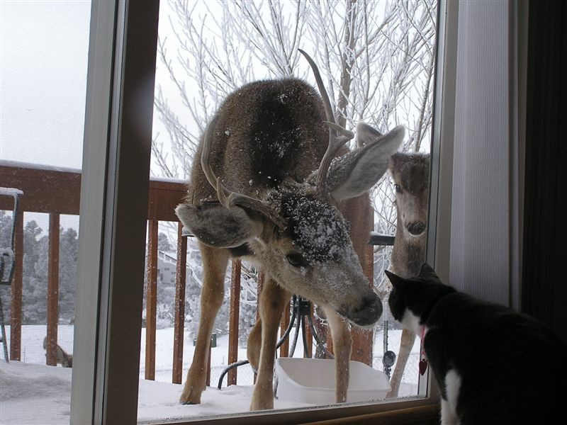 "Hunting ""Hey! You look comfy in there…can I come in??"""