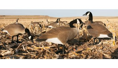 Hunting Bigfoot Full-Body Canada Goose Decoy Variety Pack   $199.99