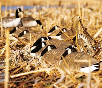 Hunting Geese don't sleep unless they are completely at ease. This relaxed posture is a signal to incoming geese that all is well. Add that final touch of convincing realism with these shell decoys. The heavy-duty bodies are molded after an original sculpture by master artist Doug Eck. The one-piece construction means no lost heads. A flawless custom-quality paint scheme combined with stunning anatomical detail will dupe even the most battle-wise geese. Sculpture Flock gives a natural texture and look to the neck, tail and head. Per 6. Type: Canada Goose Decoys. - $119.99