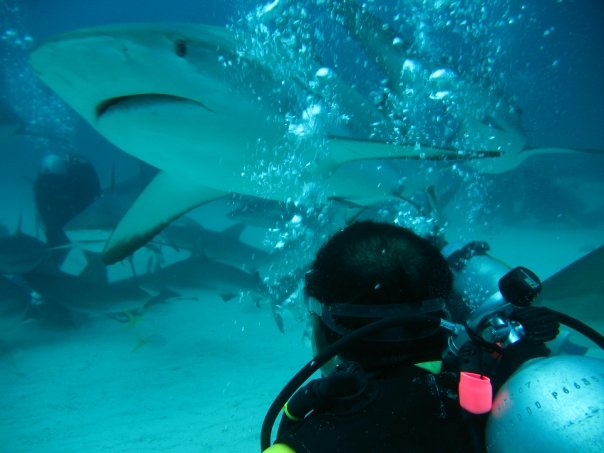 Scuba Shark dive in the Bahamas