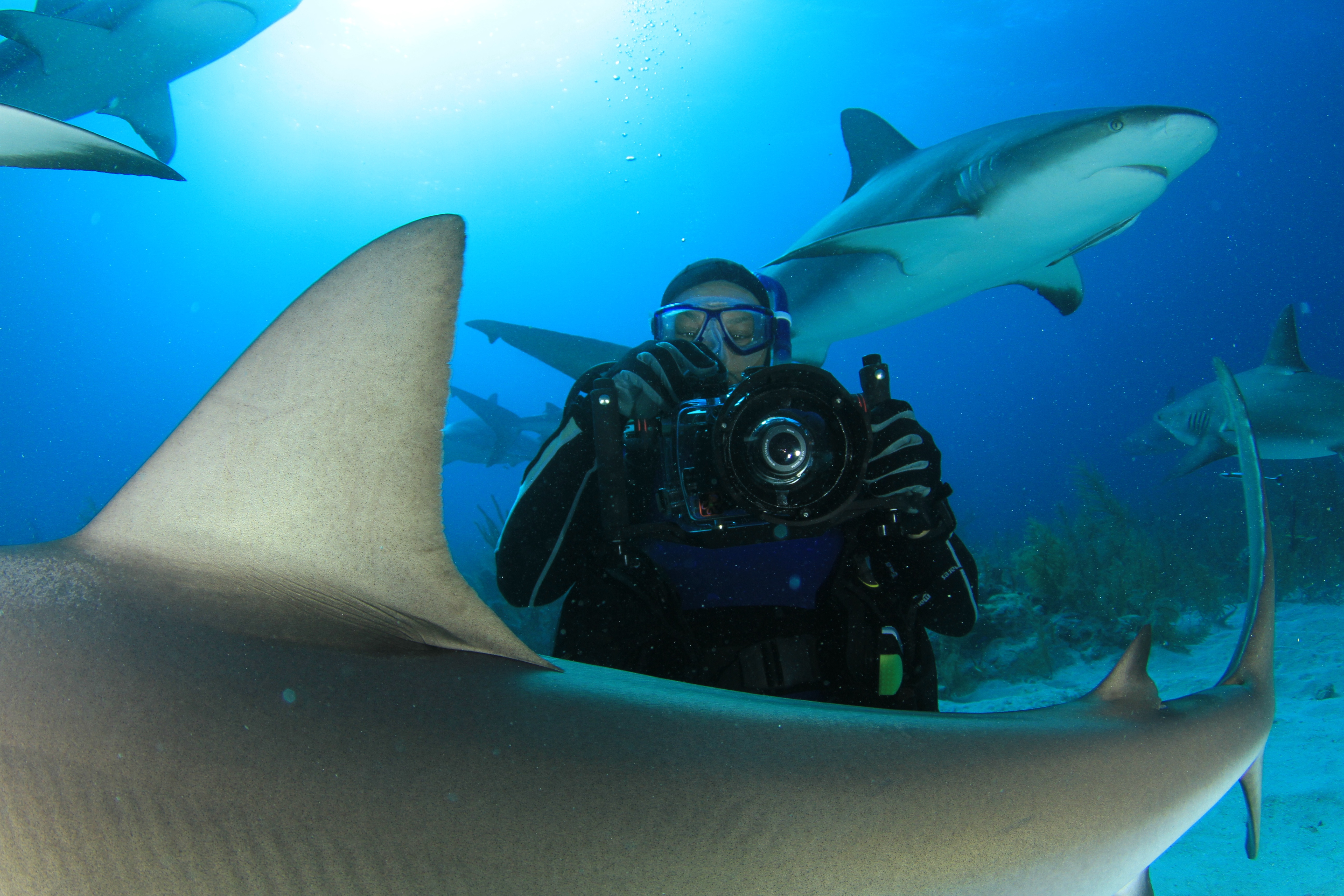 Scuba Getting my pix on at Shark Arena, Bahamas