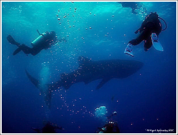Scuba Whale Sharks at Gladden Spit, Belize