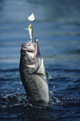 Fishing Largemouth Bass