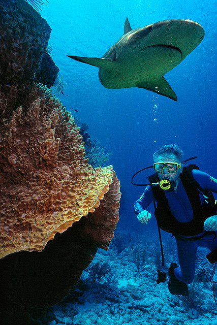 Scuba Cayman Islands