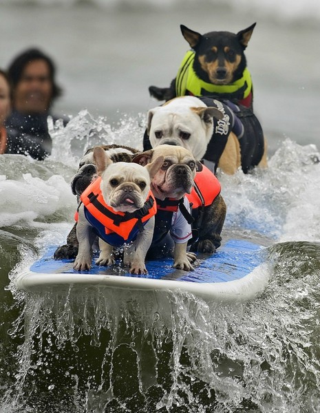 Surf We better get our treats now!