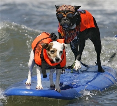 Surf Can't we just play fetch?