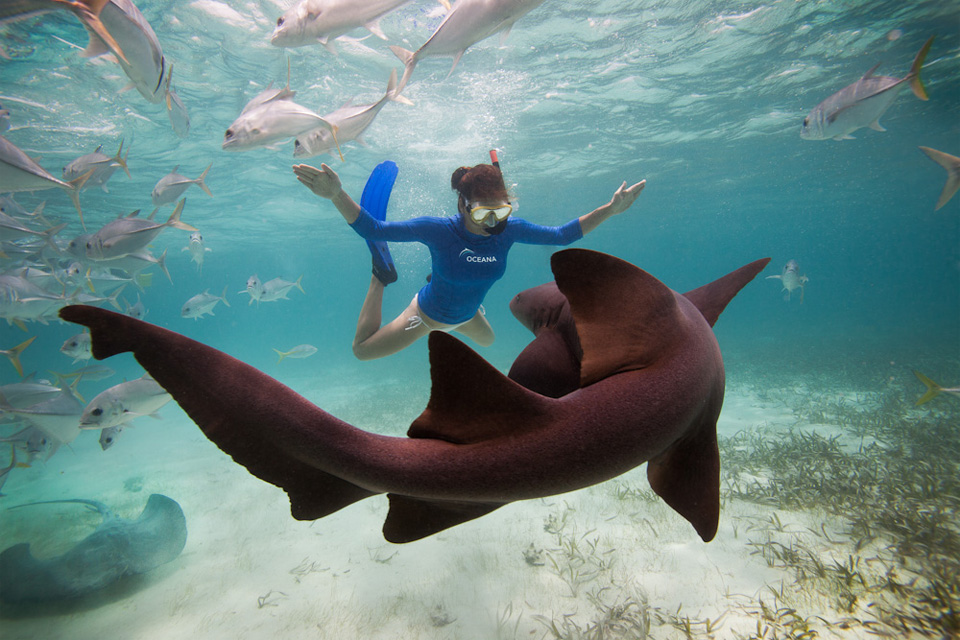 Scuba swimming with a nurse shark