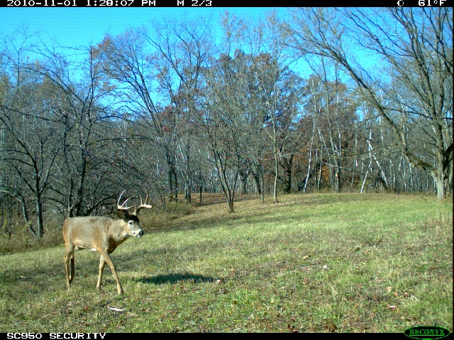 Hunting Reconyx Trail Cam