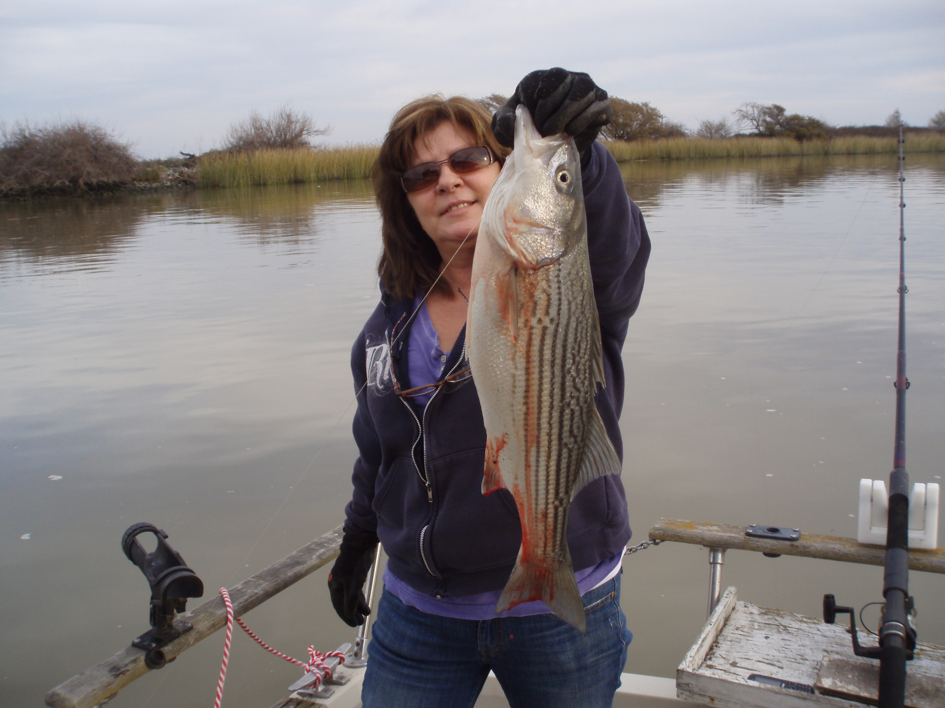 Fishing Catching Striped Bass With A Bobber