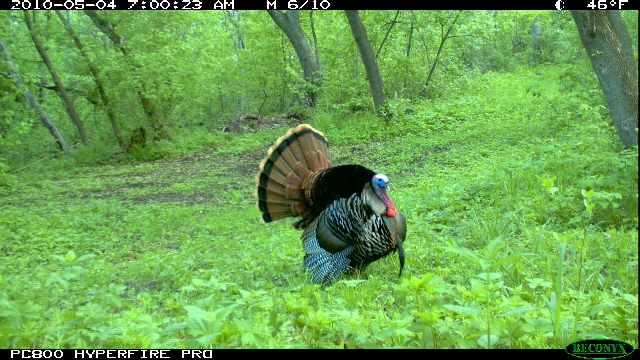 Hunting Trail Cam shot from my Reconyx