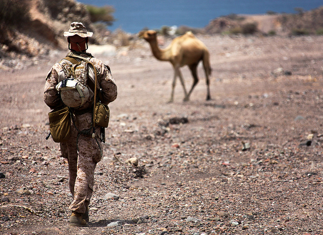 Guns and Military 1st Lt. Michael Moore, platoon commander for 1st Platoon, Bravo Company, Battalion Landing Team 1st Battalion, 2nd Marine Regiment, 24th Marine Expeditionary Unit, crosses paths with Djiboutian wildlife as he walks back to camp after taking part in assaul