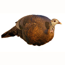 Hunting MONTANA DECOY Teaser Hen Decoy  $24.95