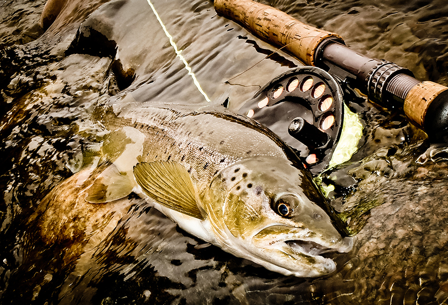 Flyfishing Madison River Brown
