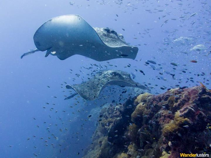 Scuba Have you ever considered working around the world as a dive master? Check out some dive location inspiration here too, while you're at it! 