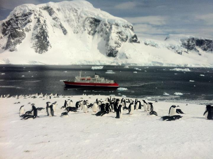 Camp and Hike Back from Antarctica! What an epic journey. Here's one of my fav moments on Cuverville Island.