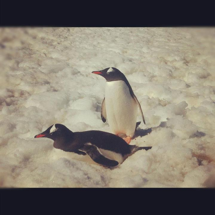 Entertainment While I'm making the long trek to Spain, here's one of my fav photos from Antarctica. ;)