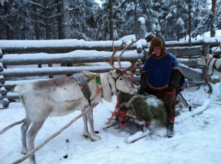 Entertainment Swooshed through the peaceful pine tree forests in Luosto, the Finnish Lapland, on a reindeer caravan!