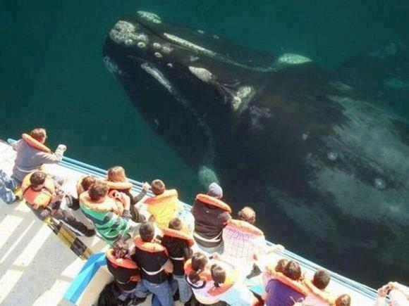 Entertainment whale sighting:)