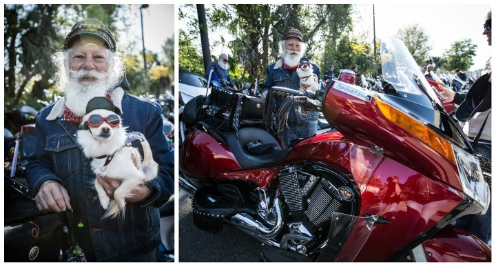 Auto and Cycle Chick DiFrancesco and his long-haired Chihuahua Buddy from Deland, FL rode in on their 2011 Vision.