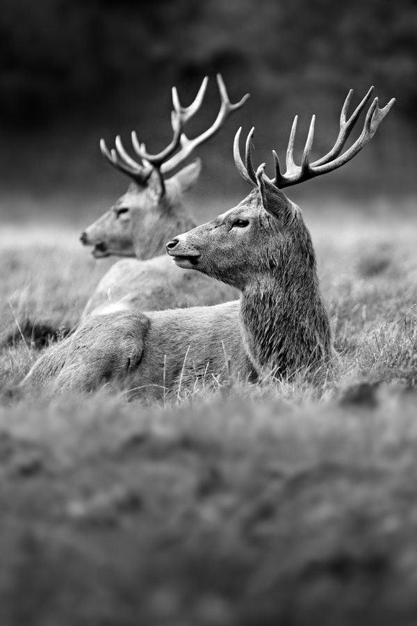 Hunting Photograph Young Guns ll by Simon Roy on 500px