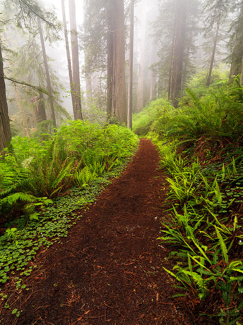 Camp and Hike Into The Fog - Redwood National Park has some of the greatest trails in the world
