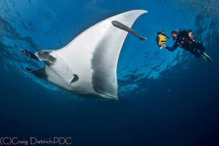Scuba Just in time for Wide-Angle Wednesday: Craig Dietrich has a Socorros Pacific manta encounter. http://bit.ly/XSQZeA