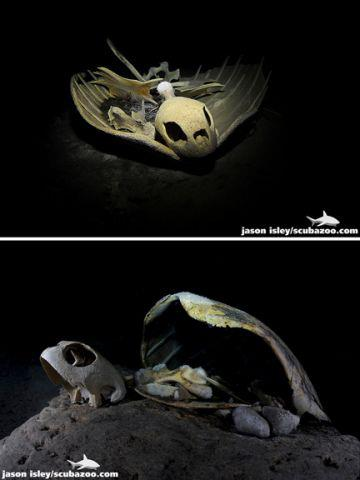 Scuba Photographer Jason Isley of Scubazoo Images recently returned from Sipadan. Which Turtle Tomb shot do you prefer?