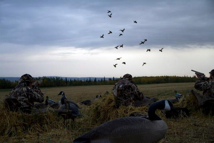 Hunting American waterfowlers flock to Canada every September and October for a first crack at ducks and geese before the birds wing their way south of the border and wise up to calling and decoy spreads.