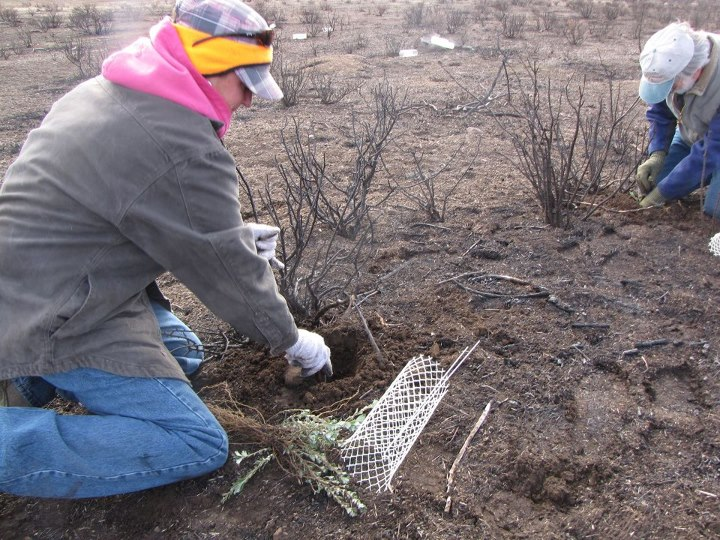 Hunting Would you like to help mule deer and pronghorns? You can reseed wildfire-scorched grazing areas this Saturday at the No. Cal Wildlife Reseeding Project! Volunteers will receive a Field & Stream/Toyota gift bag (while supplies last). http://bit.ly/1044XqO