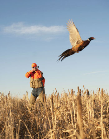 Hunting 31 days until the South Dakota Pheasant Opener