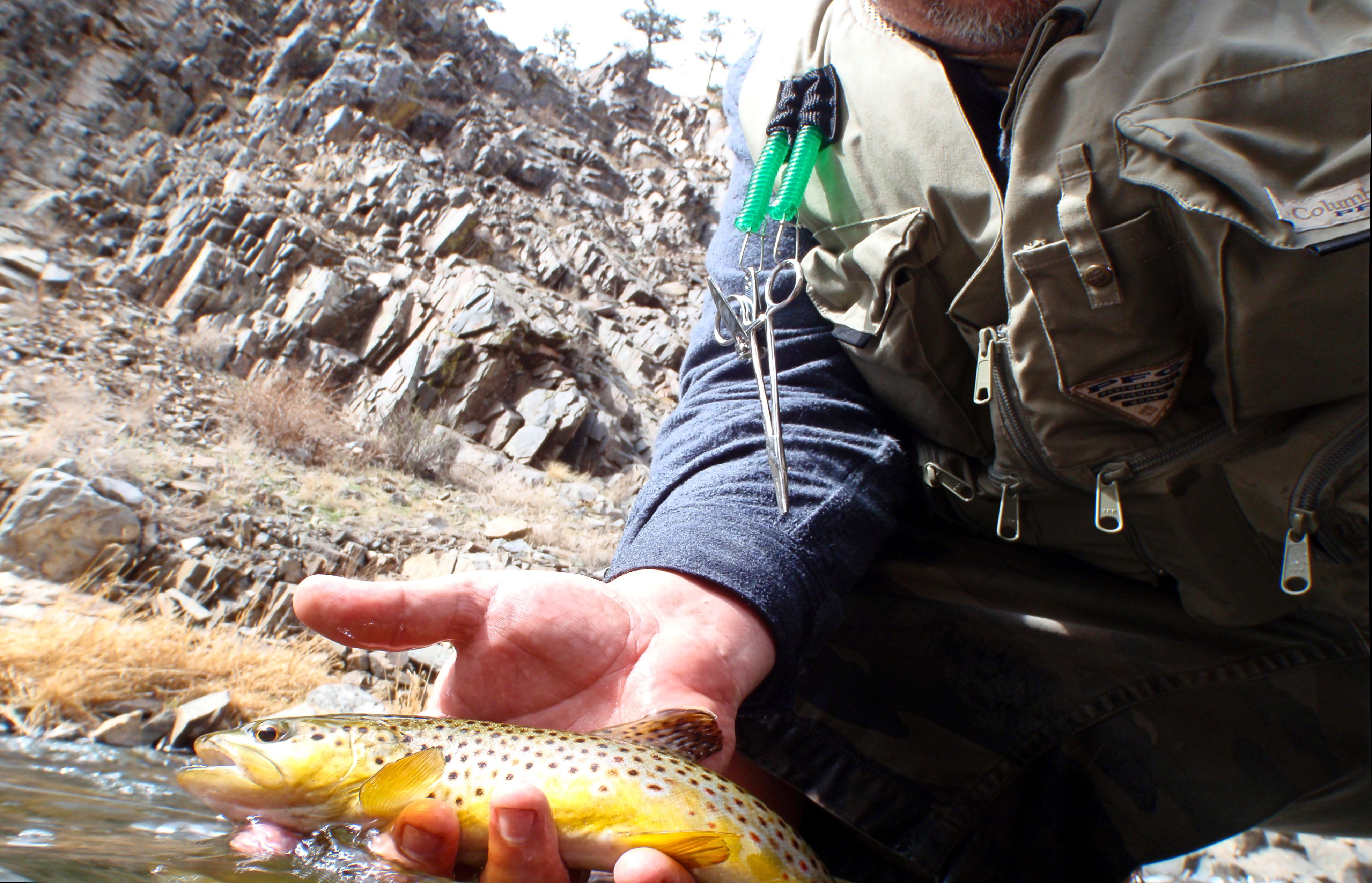 Flyfishing Early spring Brown on the Big Thompson
