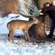 Deer stuck in a hammock ...don't see that every day/