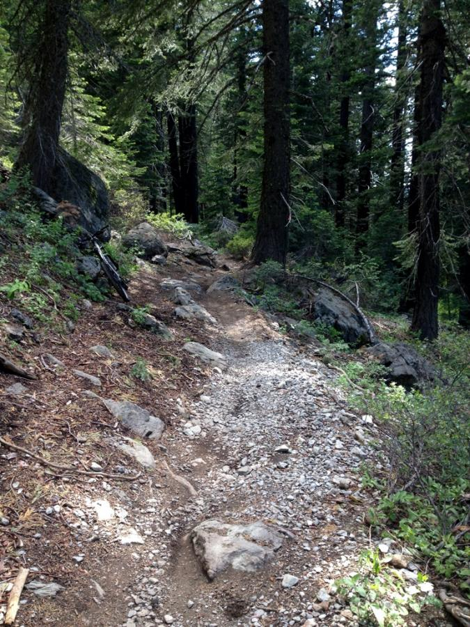 MTB Downieville Downhill, California