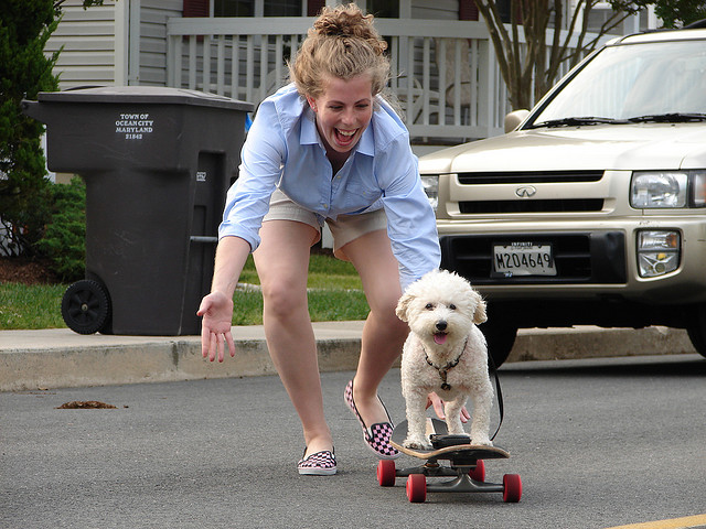 Skateboard teaching an old dog, new tricks - abby (my 14ish y/o) bichon is a natural!